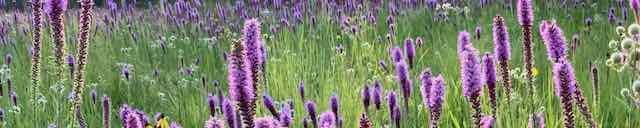 Missouri Native Plant Society